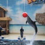 Royal Ocean World Foto