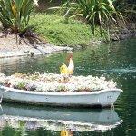 Plant arrangement in pond