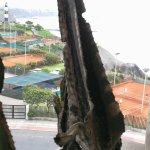 Vista en el balcon del cactus muerto seco.