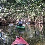 Sea Life Kayak Adventures Foto