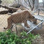 Foto de Southwest Wildlife Conservation Center