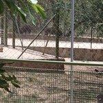 Warthogs came to visit us