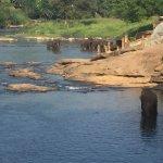 Photo of Hotel Elephant Bay
