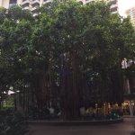 Photo of Hawaiian Monarch Hotel