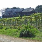 Photo of Monsoon Valley Vineyard