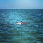 you can often see dolphins during our tours!