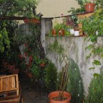 Enjoy our Summer garden