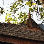 A monkey on a cottage's roof