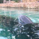Photo de Dolphin Cay