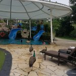 Bild från Shangri-La's Rasa Sentosa Resort & Spa