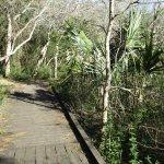 Antoher trail