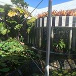 Bilde fra QT Port Douglas