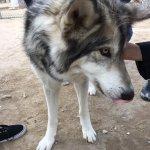 صورة فوتوغرافية لـ Wolf Mountain Sanctuary