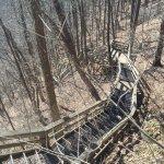 Bild från Amicalola Falls State Park