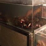 East Coast Crabbies................................hah! Lobsters.