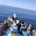 Foto Perfect Day Ocean Cruise