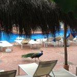 Foto de Friendly Vallarta All Inclusive Family Resort