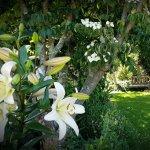 Summer lilies at Kamahi Cottage