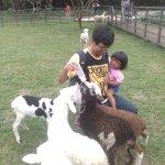 Mimiin anak kambing