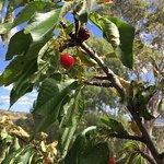 Foto de Sorell Fruit Farm