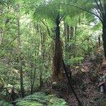 Native bush walk