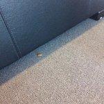 Dead bug in lounge room