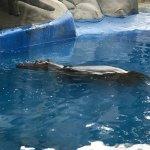 Photo of Emirates Park Zoo