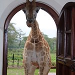 Photo de Giraffe Manor