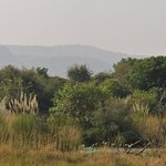 Tents overlooking Ranthambhore and open grassland. Great place to relax and enjoy the wildlife