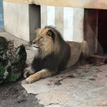 Photo de Tiergarten Schoenbrunn - Zoo Vienna