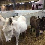 Photo de The Isle of Wight Donkey Sanctuary