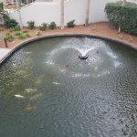 The Koi fountain