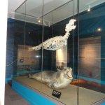 Skeleton of a sealion