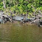 Photo de Everglades City Airboat Tours