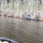 Everglades City Airboat Tours Foto