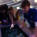 Inspecting Moon Jelly Fish at the Living Seashore display.