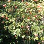 Garinish Island in Bantry Bay: Flowers evverywhere