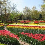 Photo of Keukenhof