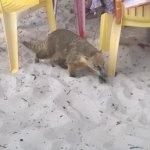 Campeche island照片