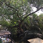 Photo de Bangkok Tree House