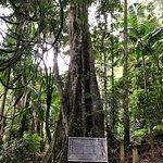 Photo of Tamborine Rainforest Skywalk