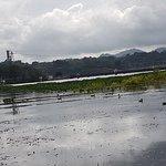 Foto de Gatun Lake