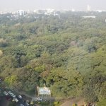 Cubbon Park, view from 1204