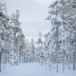 Beautiful scenery near Kiruna