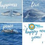 Photo de Raja & the Whales
