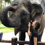 Photo de Mason Elephant Lodge