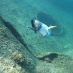 Shipwreck fish