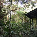 Trail from Camp Leakey, bird watching