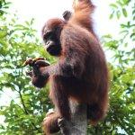 Foto de Rimba Orangutan Eco Lodge