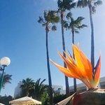 Foto de Oasis Lanz Beach Mate